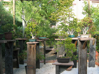 The Bonsai Garden 2004 devoted to bonsai art and gardening